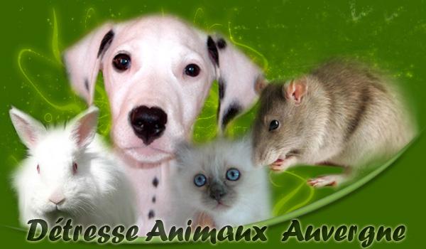 Détresse Animaux Auvergne Association loi 1901