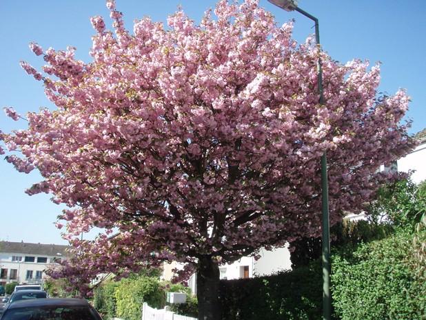 arbre_12
