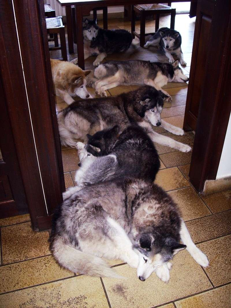 chiens10.jpg