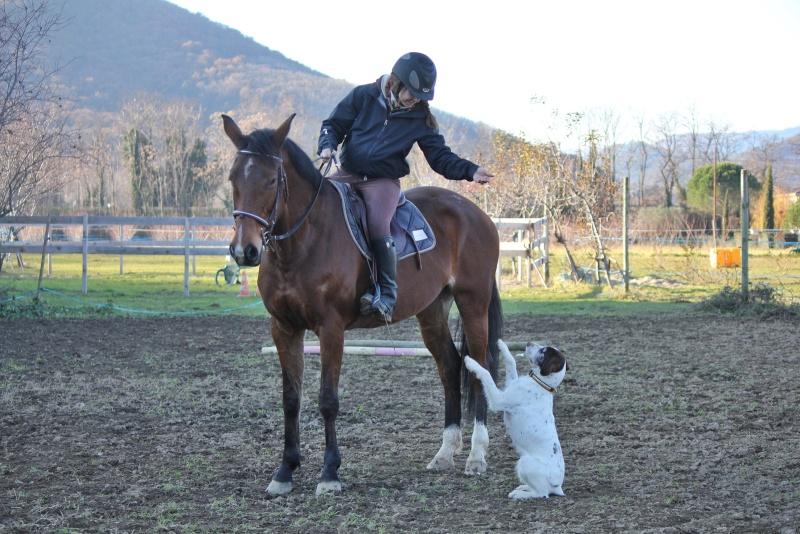 promenade a cheval pyrenees