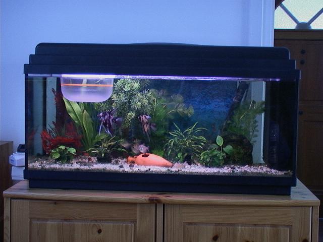 La nanification v cue et en images for Aquarium poisson rouge adulte