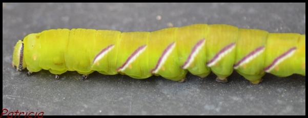 dsc_0021 dans insectes