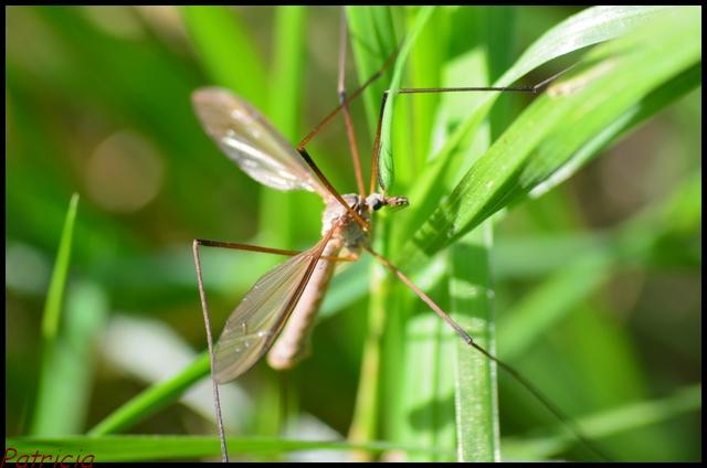 dsc_0022 dans insectes