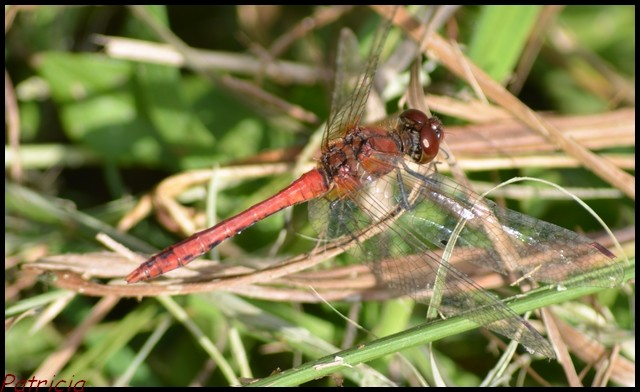 dsc_0031 dans insectes