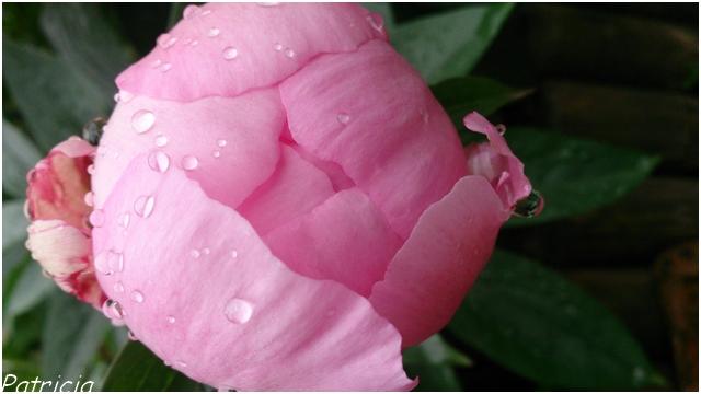dsc_0053 dans fleurs