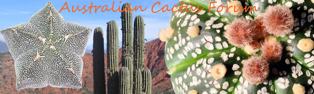 Australian Cacti Forum