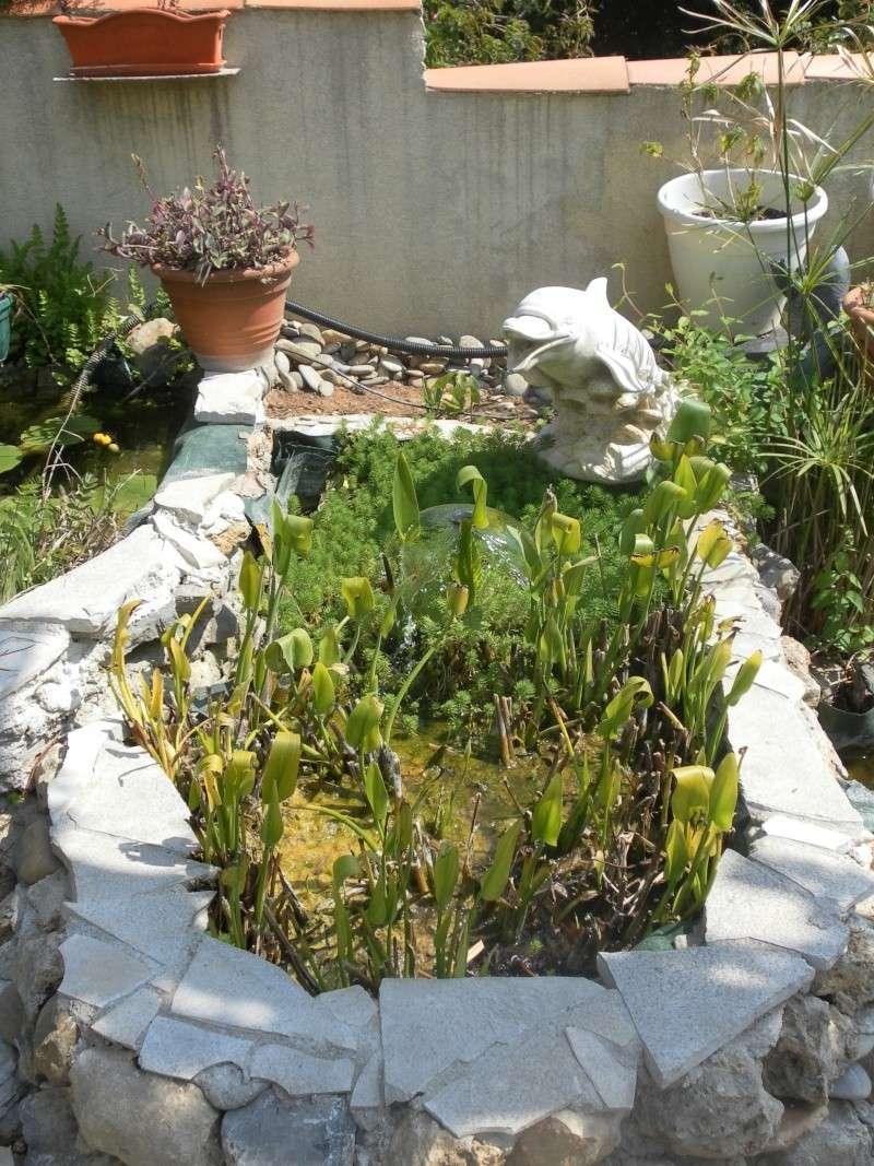 Le jardin de syljou page 3 for Vive le jardin ales