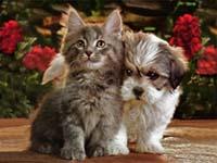 Adopciones Perros y Gatos