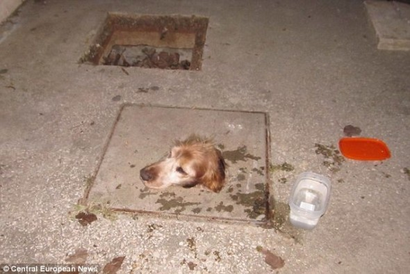 Can Cats Get Out Of Sewers