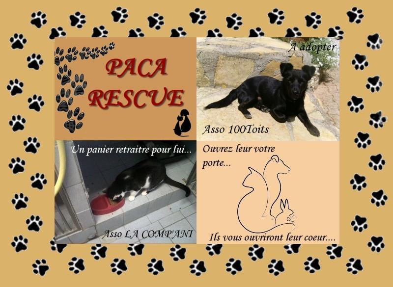 Paca Rescue