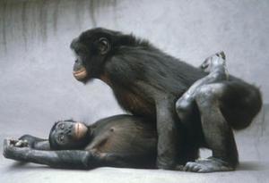 bonobo10.jpg