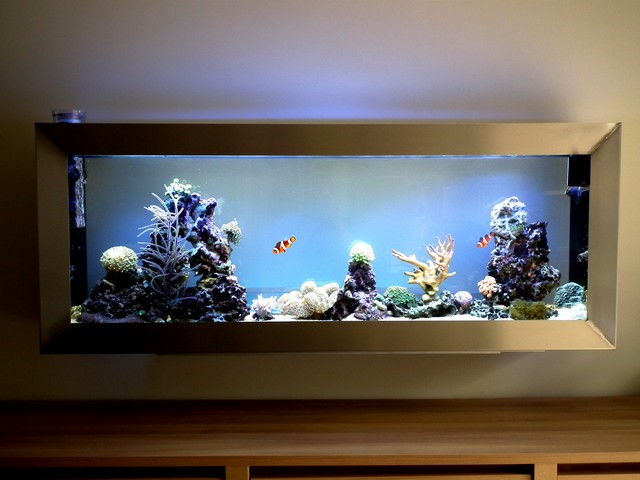 Aquascaping 150 litres au mur -> Aquarium Eau De Mer Design