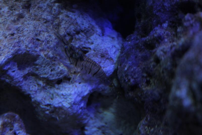 Nouvel aquarium 140 litres for Vendeur aquarium