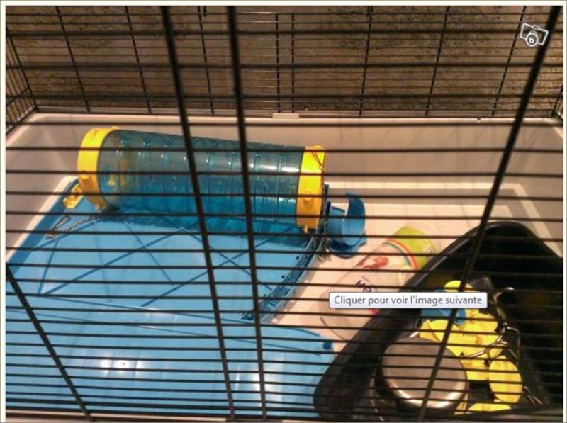 cage a la maison photos page 2. Black Bedroom Furniture Sets. Home Design Ideas