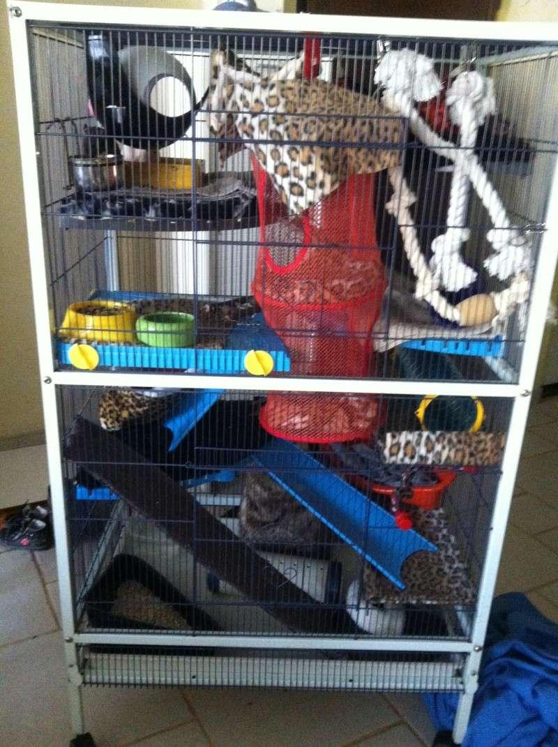 cage reamenag e photos. Black Bedroom Furniture Sets. Home Design Ideas