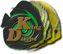 King Discus