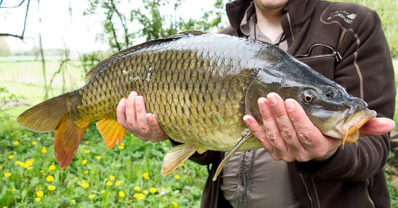 La pêche sur la brème à 2014