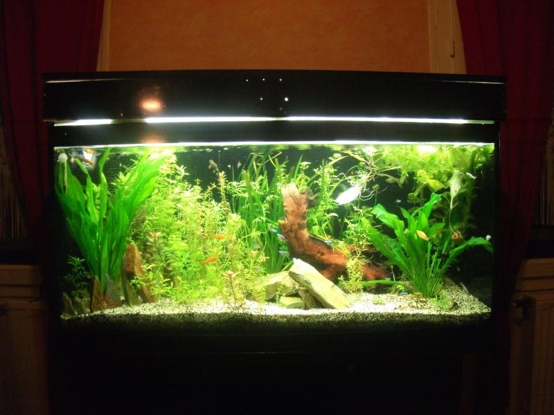 aquarium nantes 28 images voyage 224 nantes les 5. Black Bedroom Furniture Sets. Home Design Ideas
