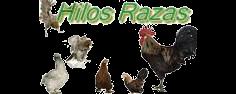 Hilos de seguimiento sobre Razas de gallinas.