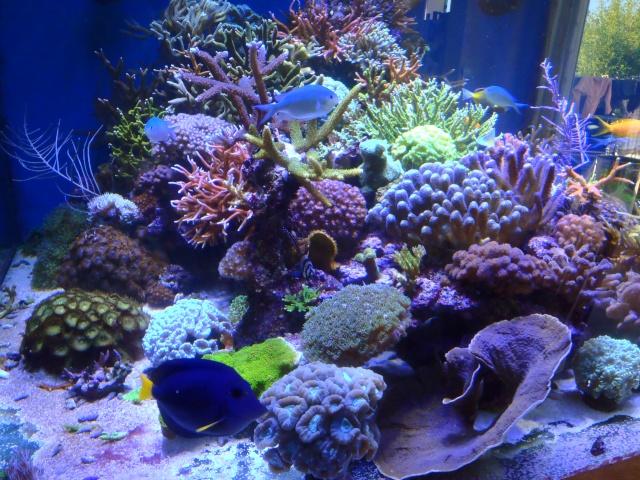 Recifal france ciel mes coraux n crosent les nuisibles for Aquarium insolite