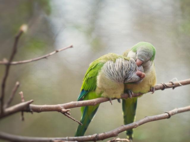 amour oiseaux