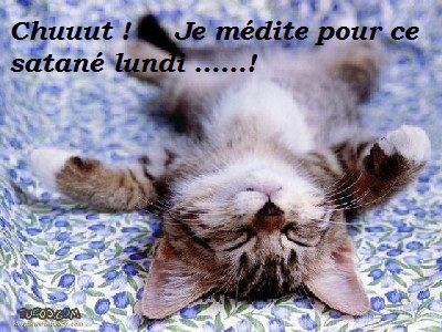 """Résultat de recherche d'images pour """"images DEMAIN C'est lundi chats"""""""