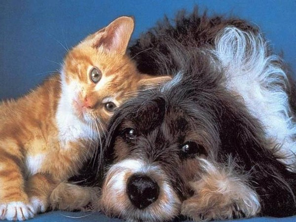 tendresse chat chien