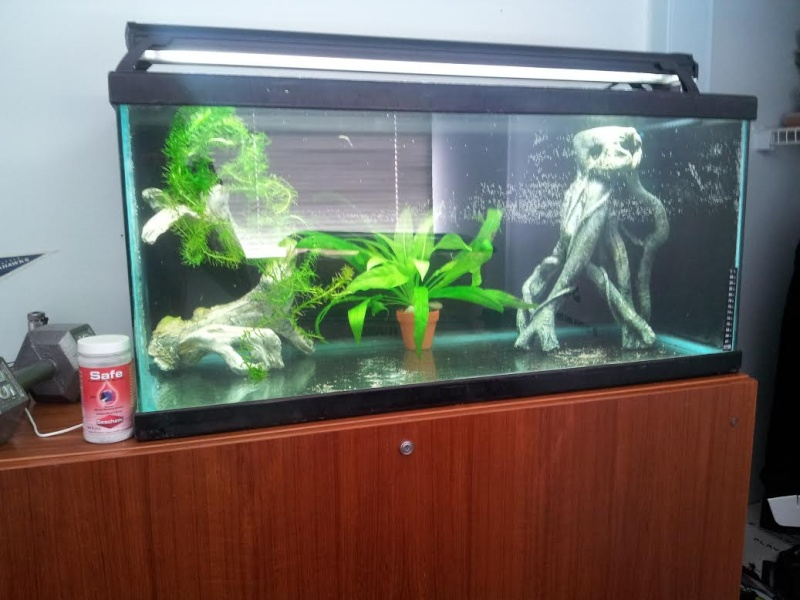 Decoration Aquarium Axolotl : Moving axolotl to breeder tank filtration wafishbox