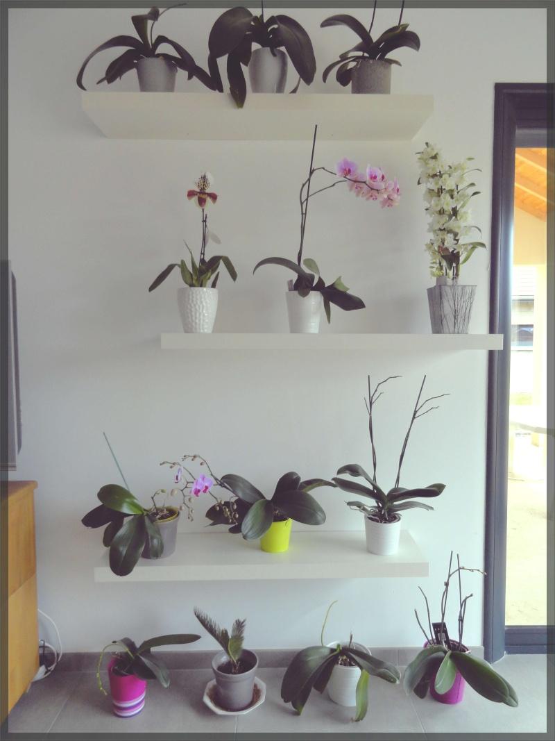 suspension pour orchid es bw87 jornalagora. Black Bedroom Furniture Sets. Home Design Ideas