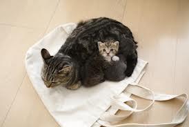 Soins aux chatons nouveau-ns et maladies des trs jeunes