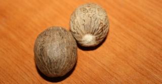 planter une noix de muscade