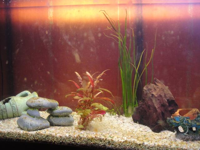d 233 marrage er aquarium d eau douce