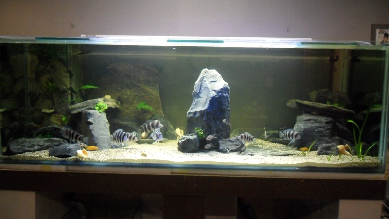 mon aquarium 800 litres. Black Bedroom Furniture Sets. Home Design Ideas