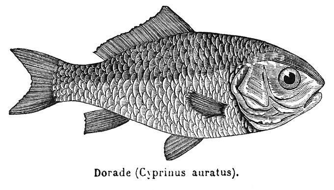 Maj du 31 03 2015 article 5 le poisson rouge arrive for Achat poisson rouge paris 18