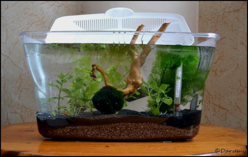 Projet 9 litres maintenance betta plantes lumi re naturelle - Plante sans lumiere naturelle ...