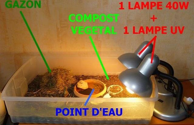 lampe uv pour terrarium tortue