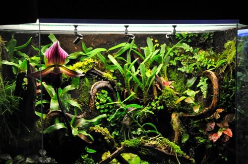 orchid e dans terrariums tropicaux. Black Bedroom Furniture Sets. Home Design Ideas